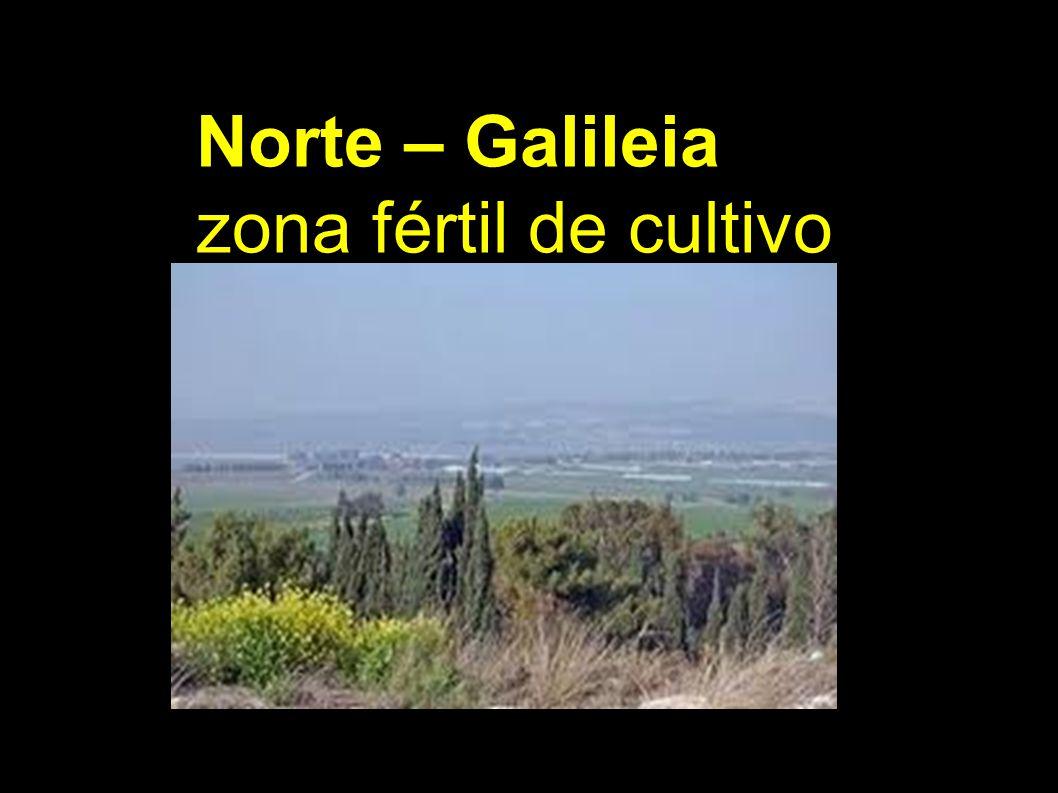 Norte – Galileia zona fértil de cultivo