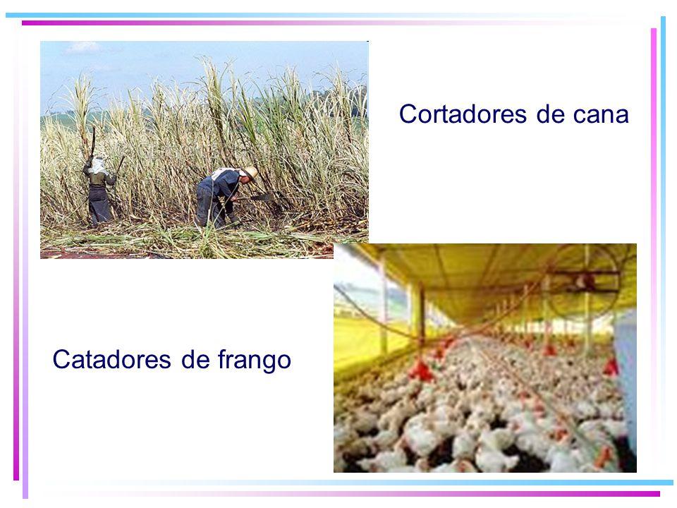 Cortadores de cana Catadores de frango