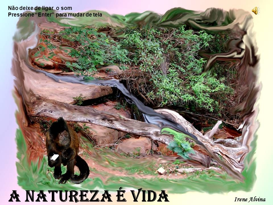 www.revivendoanatureza.com Cuide com carinho das nascentes, dos rios, matas, flores, etc.