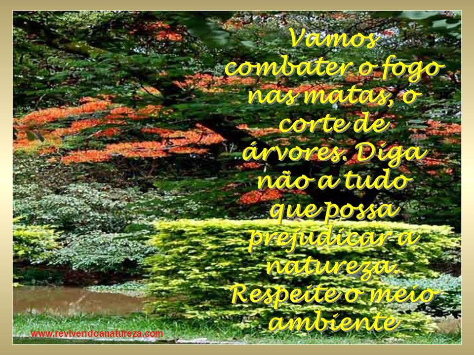 www.revivendoanatureza.com Vamos combater o fogo nas matas, o corte de árvores. Diga não a tudo que possa prejudicar a natureza. Respeite o meio ambie