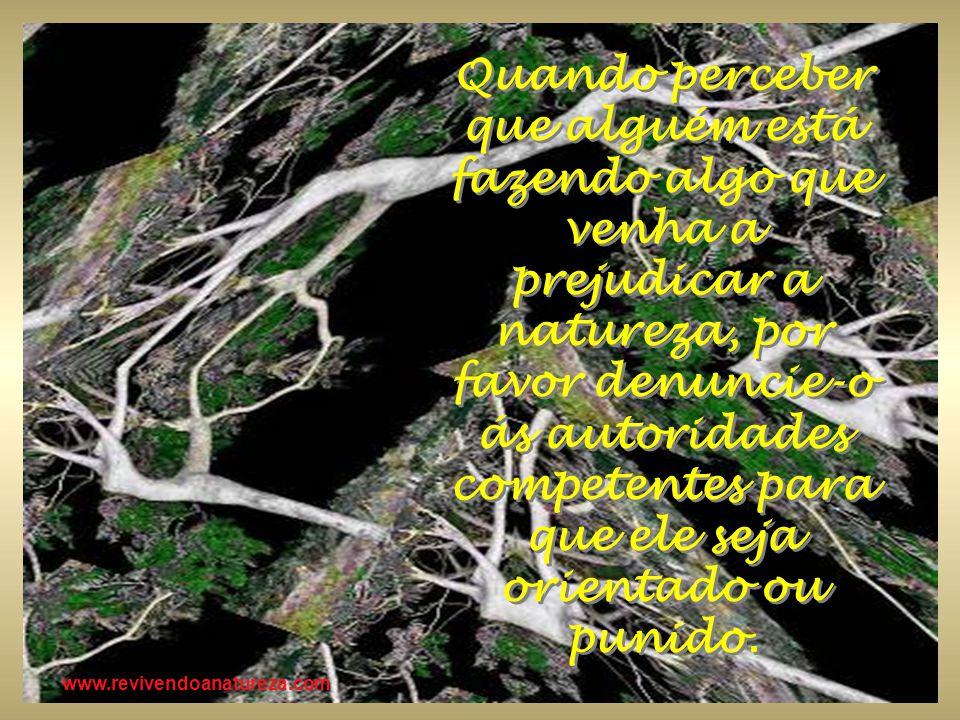 www.revivendoanatureza.com Quando perceber que alguém está fazendo algo que venha a prejudicar a natureza, por favor denuncie-o ás autoridades compete