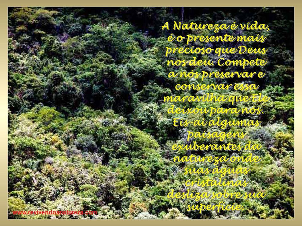 No final da trilha em meio a exuberante mata, uma magnífica rocha mostra a beleza da Natureza.