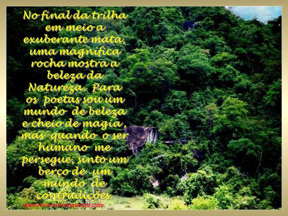 www.revivendoanatureza.com Ela nos mostra sua beleza nas montanhas, animais, rios, plantas, pedras e muitas outras riquezas que somente ela possui.