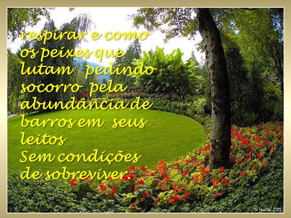 www.revivendoanatureza.com Existem árvores que somente enfeitam, outras nos dão seu fruto, todas tem sua importância e finalidade.