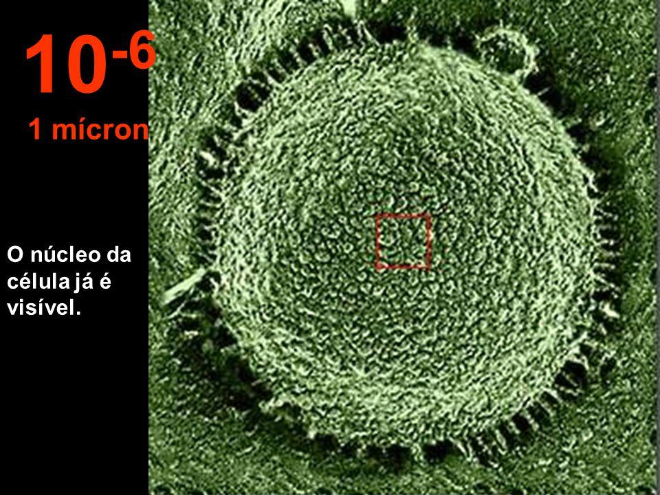 Começa nossa viagem ao interior da célula. 10 -5 10 micrômetros