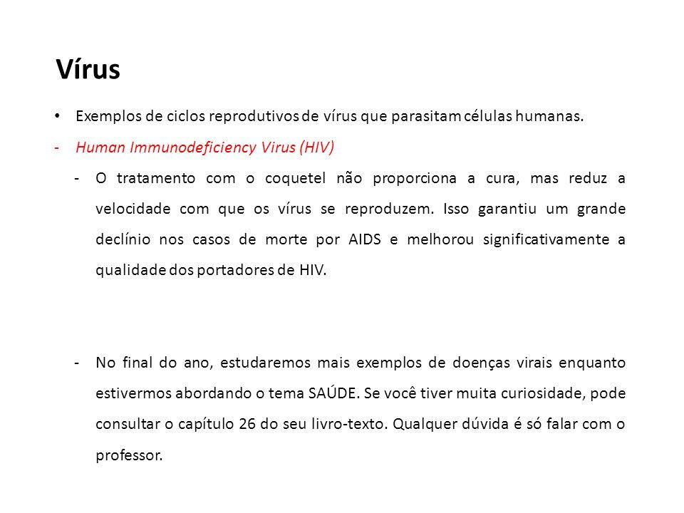 Vírus Exemplos de ciclos reprodutivos de vírus que parasitam células humanas. -Human Immunodeficiency Virus (HIV) -O tratamento com o coquetel não pro