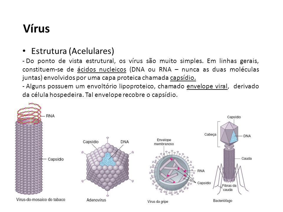 Vírus Estrutura (Acelulares) - Do ponto de vista estrutural, os vírus são muito simples. Em linhas gerais, constituem-se de ácidos nucleicos (DNA ou R