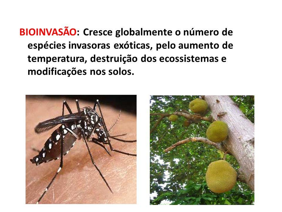 BIOINVASÃO: Cresce globalmente o número de espécies invasoras exóticas, pelo aumento de temperatura, destruição dos ecossistemas e modificações nos so