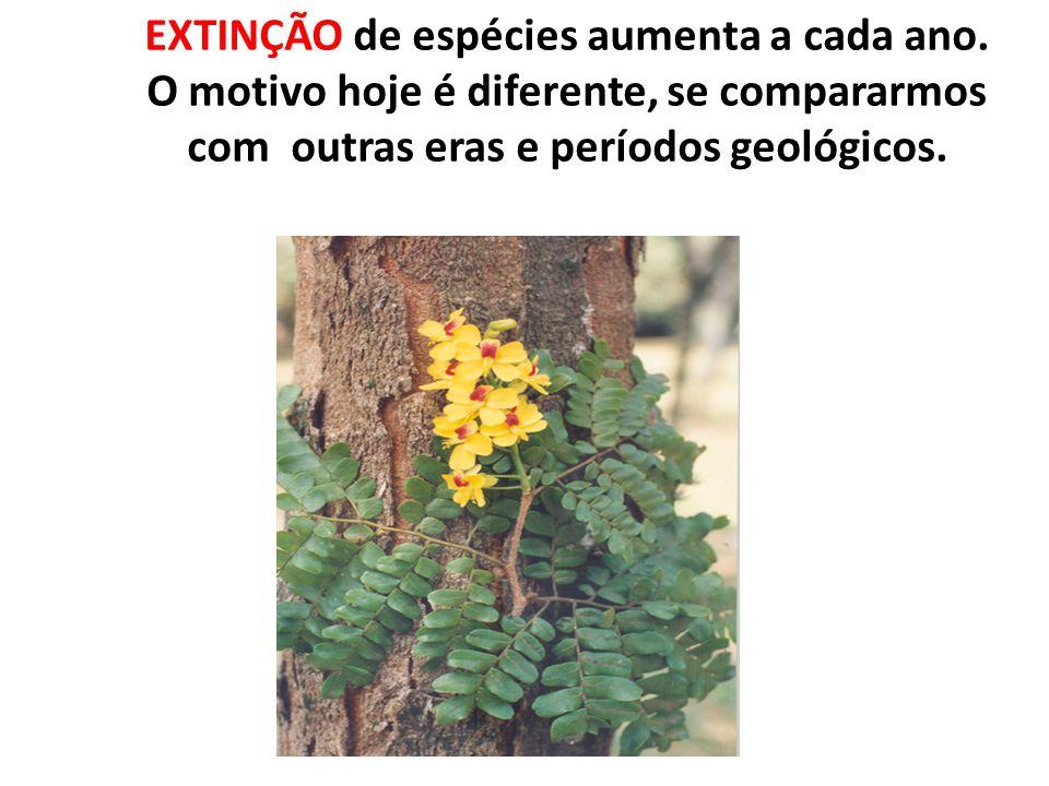EXTINÇÃO de espécies aumenta a cada ano. O motivo hoje é diferente, se compararmos com outras eras e períodos geológicos.