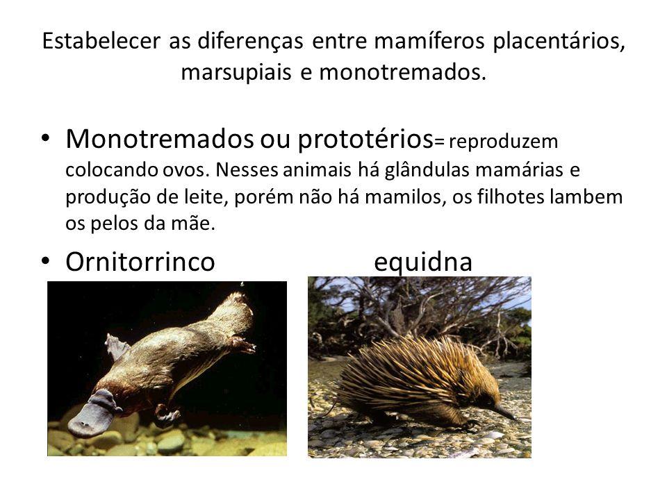 Estabelecer as diferenças entre mamíferos placentários, marsupiais e monotremados. Monotremados ou prototérios = reproduzem colocando ovos. Nesses ani