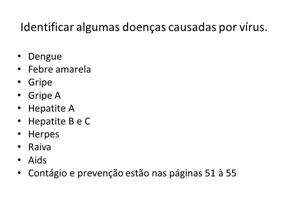 Identificar algumas doenças causadas por vírus. Dengue Febre amarela Gripe Gripe A Hepatite A Hepatite B e C Herpes Raiva Aids Contágio e prevenção es