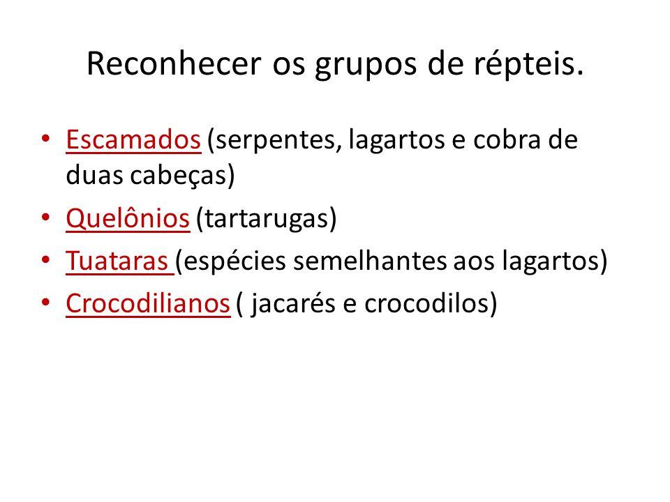 Reconhecer os grupos de répteis. Escamados (serpentes, lagartos e cobra de duas cabeças) Quelônios (tartarugas) Tuataras (espécies semelhantes aos lag