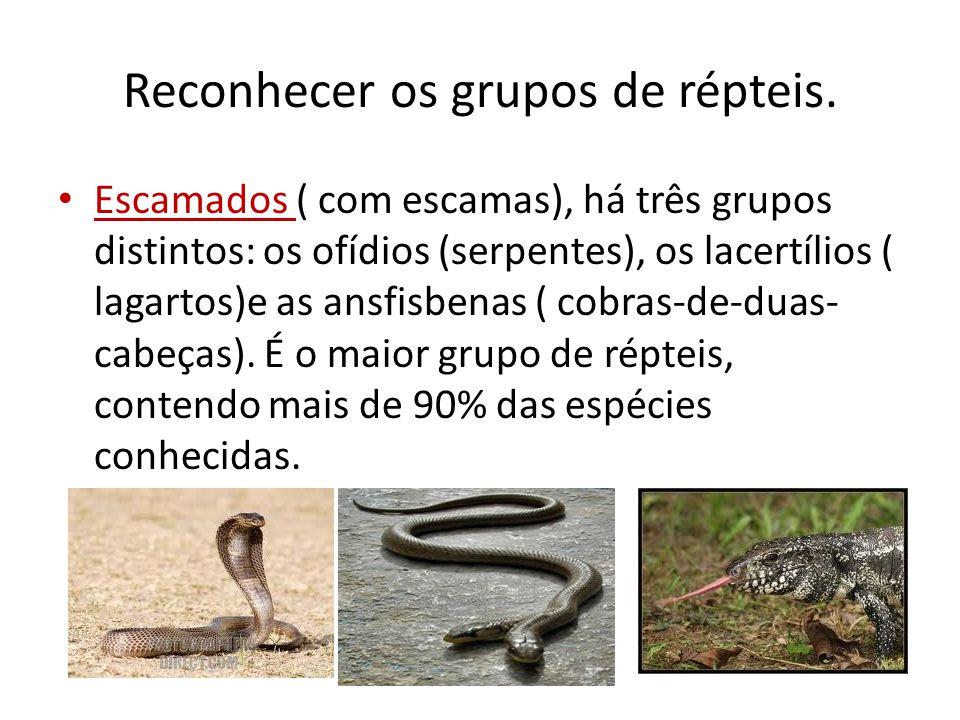 Reconhecer os grupos de répteis. Escamados ( com escamas), há três grupos distintos: os ofídios (serpentes), os lacertílios ( lagartos)e as ansfisbena