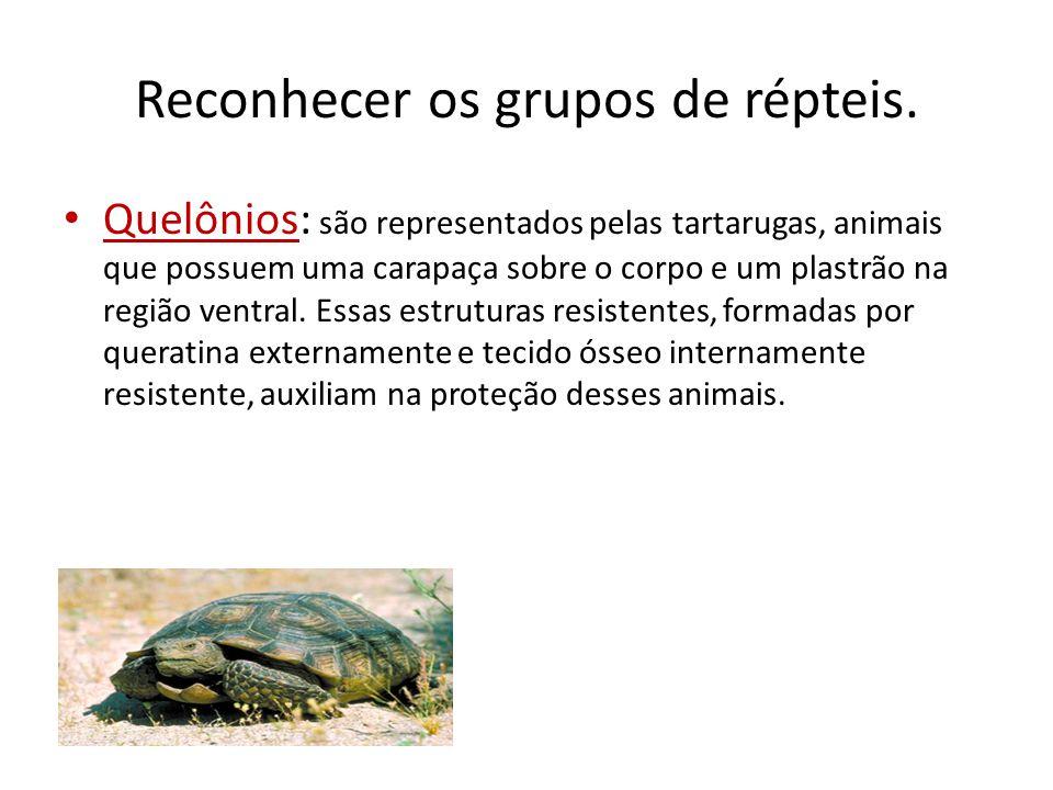 Reconhecer os grupos de répteis. Quelônios: são representados pelas tartarugas, animais que possuem uma carapaça sobre o corpo e um plastrão na região