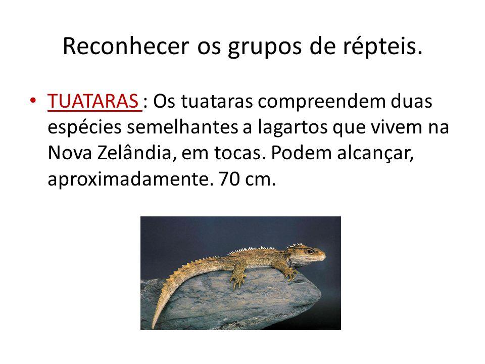 Reconhecer os grupos de répteis. TUATARAS : Os tuataras compreendem duas espécies semelhantes a lagartos que vivem na Nova Zelândia, em tocas. Podem a