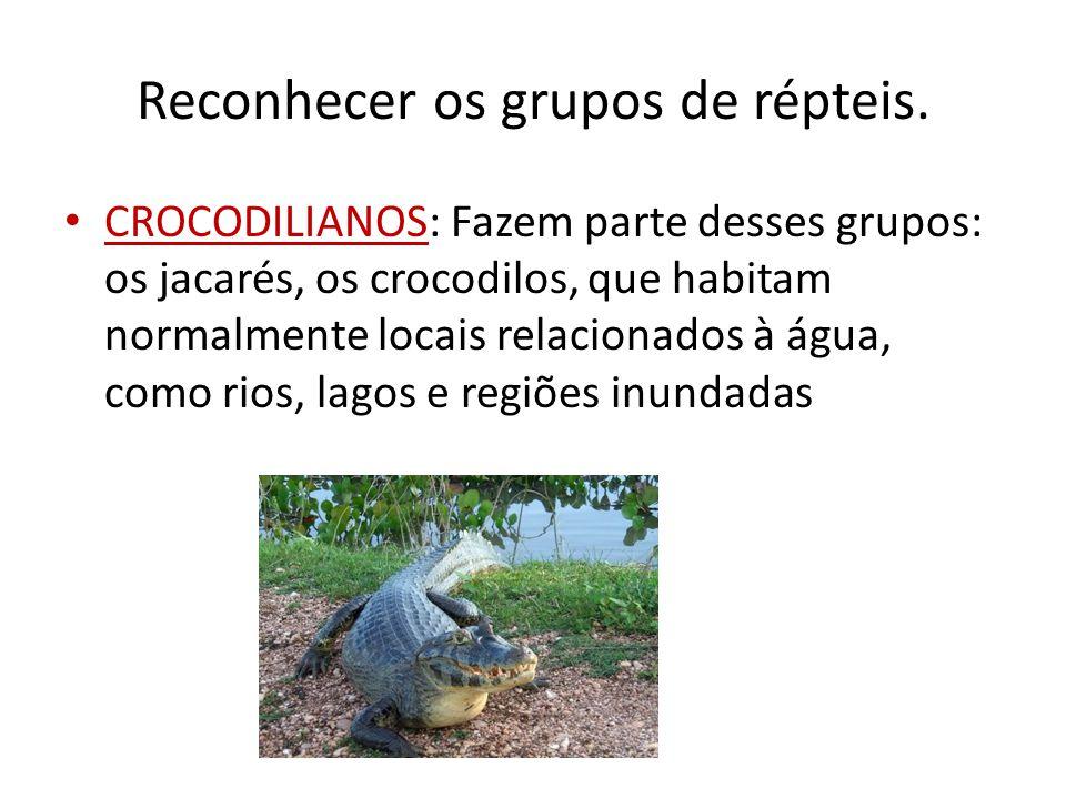 Reconhecer os grupos de répteis. CROCODILIANOS: Fazem parte desses grupos: os jacarés, os crocodilos, que habitam normalmente locais relacionados à ág