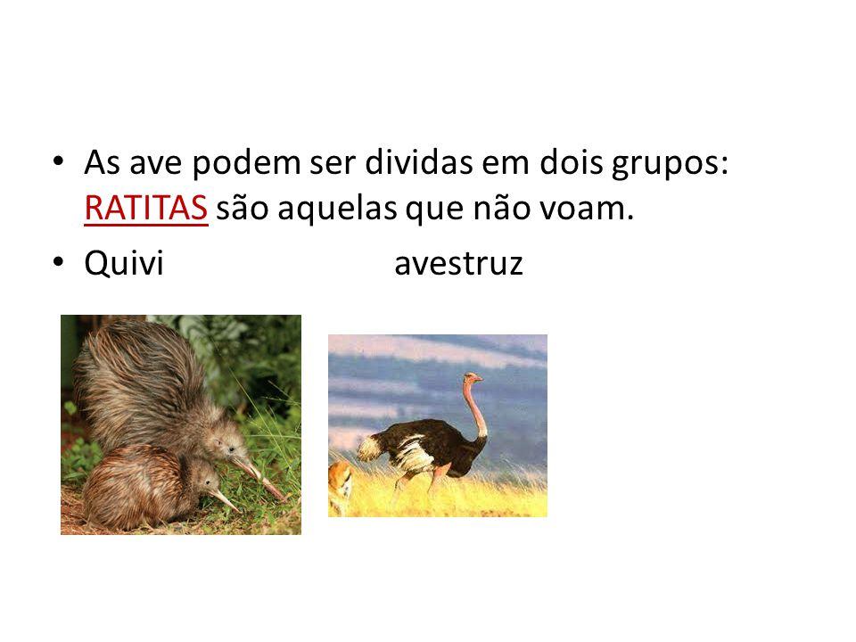 As ave podem ser dividas em dois grupos: RATITAS são aquelas que não voam. Quiviavestruz