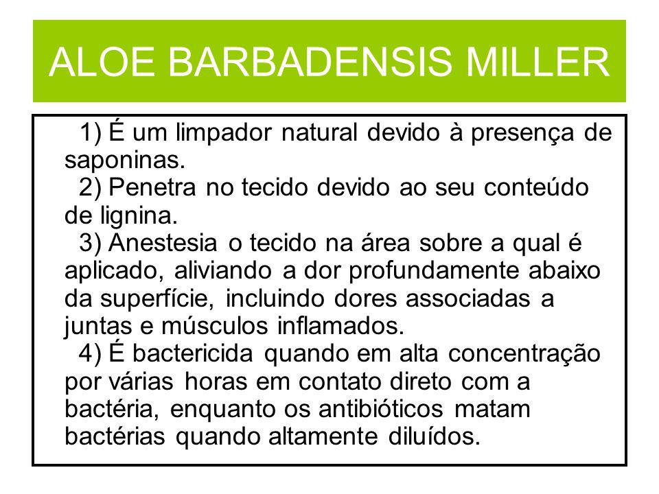 ALOE BARBADENSIS MILLER 1) É um limpador natural devido à presença de saponinas. 2) Penetra no tecido devido ao seu conteúdo de lignina. 3) Anestesia