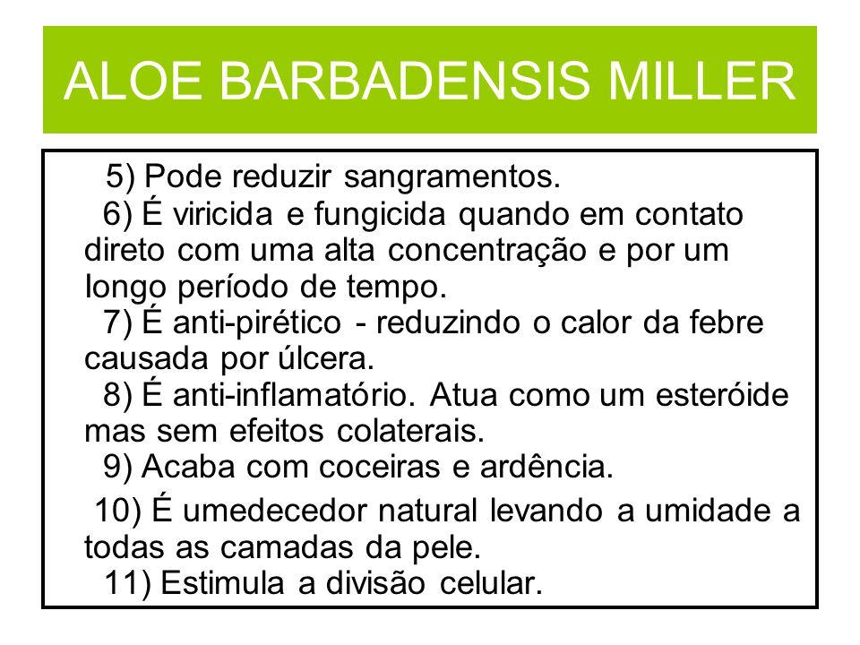 ALOE BARBADENSIS MILLER 5) Pode reduzir sangramentos. 6) É viricida e fungicida quando em contato direto com uma alta concentração e por um Iongo perí