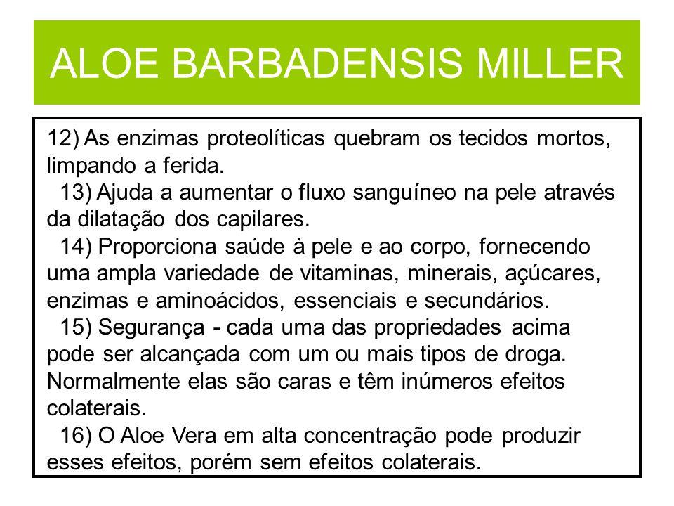 ALOE BARBADENSIS MILLER 12) As enzimas proteolíticas quebram os tecidos mortos, limpando a ferida. 13) Ajuda a aumentar o fluxo sanguíneo na pele atra
