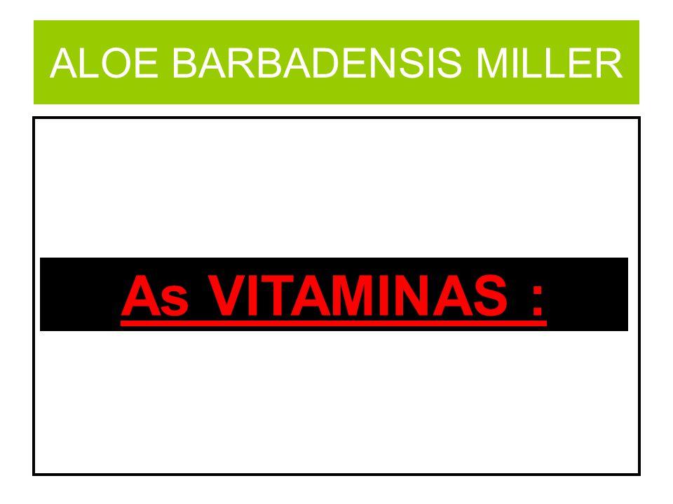 ALOE BARBADENSIS MILLER A (Beta Caroteno) Visão, pele, ossos e contra a anemia.
