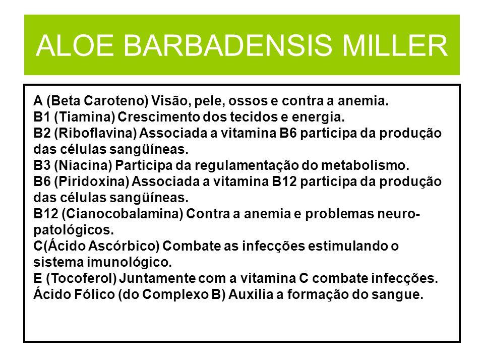 ALOE BARBADENSIS MILLER A (Beta Caroteno) Visão, pele, ossos e contra a anemia. B1 (Tiamina) Crescimento dos tecidos e energia. B2 (Riboflavina) Assoc
