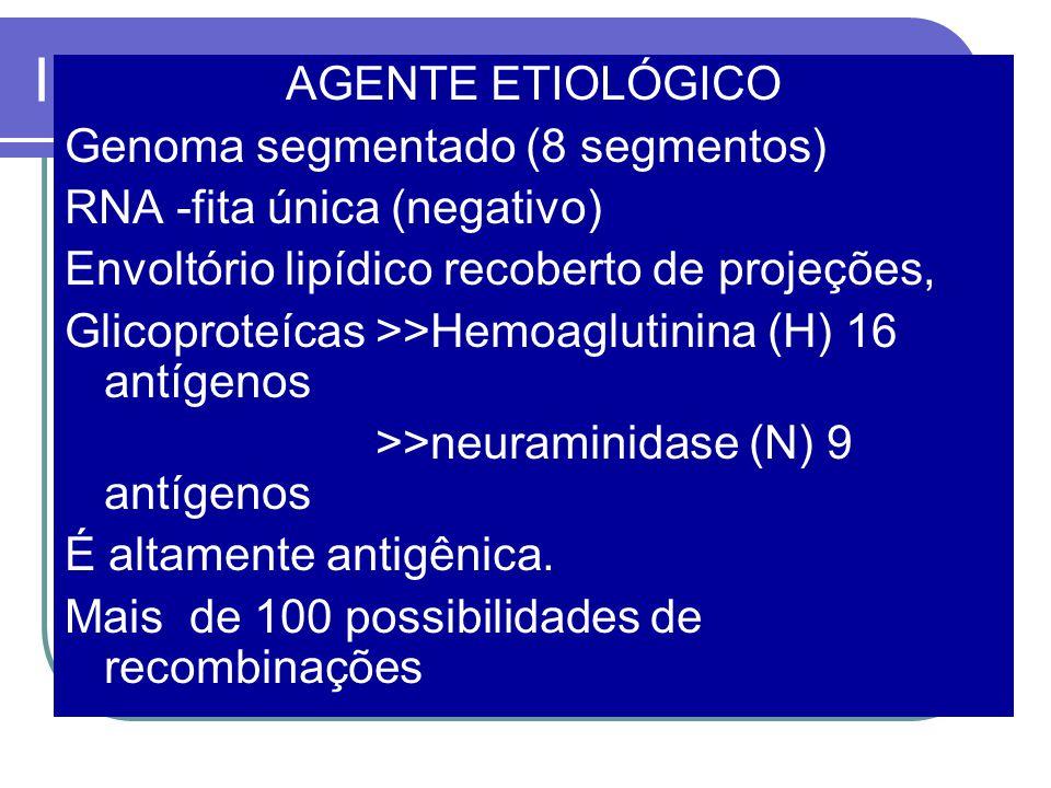 INFLUENZA AGENTE ETIOLÓGICO Genoma segmentado (8 segmentos) RNA -fita única (negativo) Envoltório lipídico recoberto de projeções, Glicoproteícas >>Hemoaglutinina (H) 16 antígenos >>neuraminidase (N) 9 antígenos É altamente antigênica.