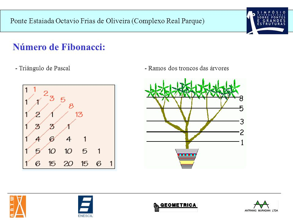 Ponte Estaiada Octavio Frias de Oliveira (Complexo Real Parque) Número de Fibonacci: - Triângulo de Pascal- Ramos dos troncos das árvores