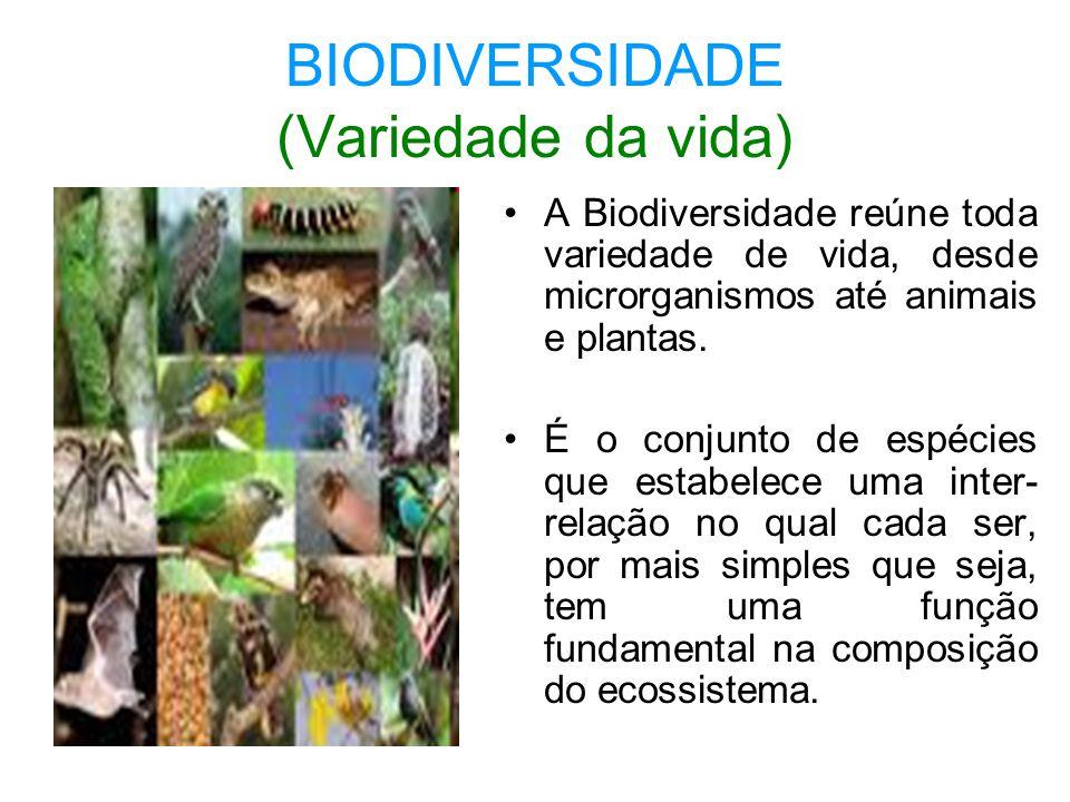BIODIVERSIDADE (Variedade da vida) A Biodiversidade reúne toda variedade de vida, desde microrganismos até animais e plantas. É o conjunto de espécies