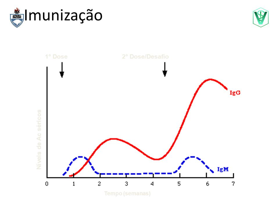 Imunização Tempo (semanas) Níveis de Ac séricos 1° Dose2° Dose/Desafio