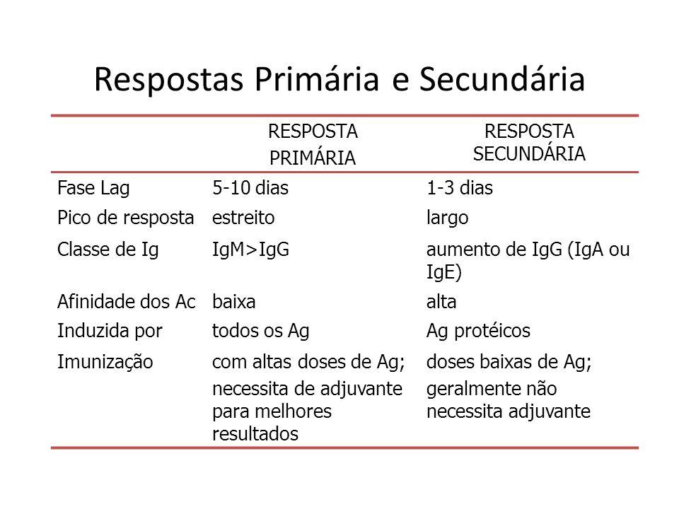 Respostas Primária e Secundária RESPOSTA PRIMÁRIA RESPOSTA SECUNDÁRIA Fase Lag5-10 dias1-3 dias Pico de respostaestreitolargo Classe de IgIgM>IgGaumen