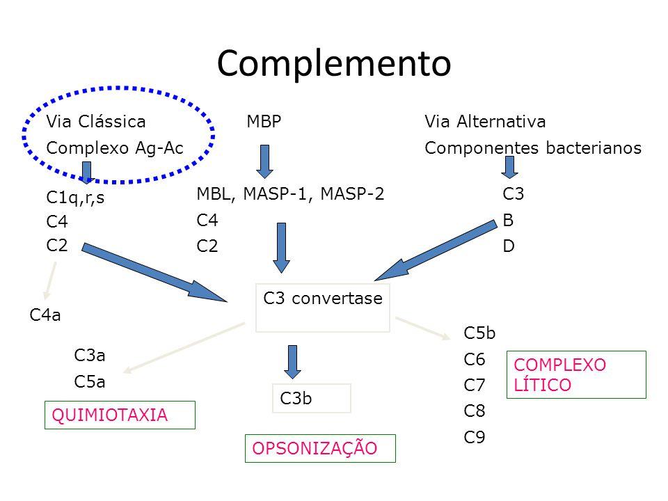 Complemento Via Clássica Complexo Ag-Ac MBPVia Alternativa Componentes bacterianos C1q,r,s C4 C2 MBL, MASP-1, MASP-2 C4 C2 C3 B D C3 convertase C3b C5