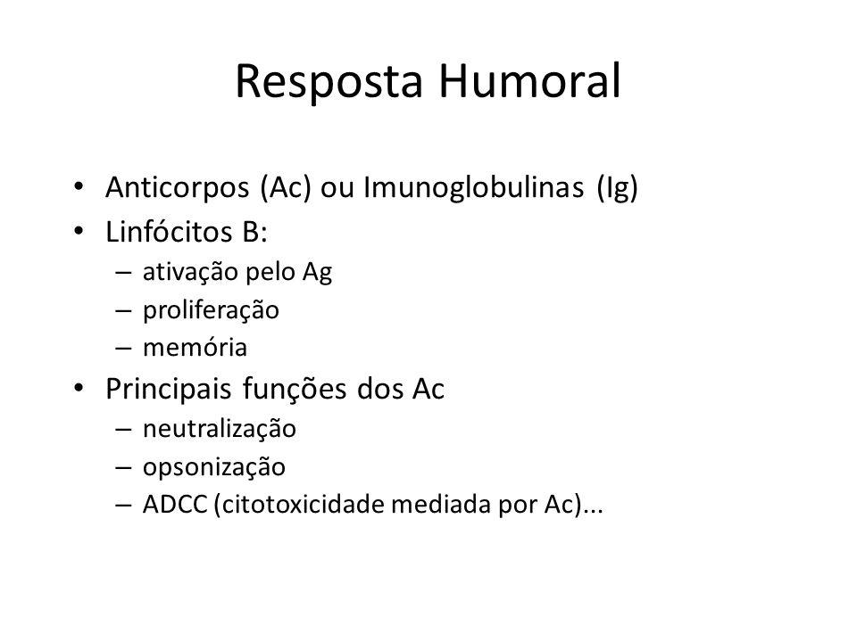 Anticorpos (Ac) ou Imunoglobulinas (Ig) Linfócitos B: – ativação pelo Ag – proliferação – memória Principais funções dos Ac – neutralização – opsoniza