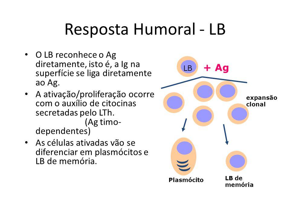 Resposta Humoral - LB O LB reconhece o Ag diretamente, isto é, a Ig na superfície se liga diretamente ao Ag. A ativação/proliferação ocorre com o auxí
