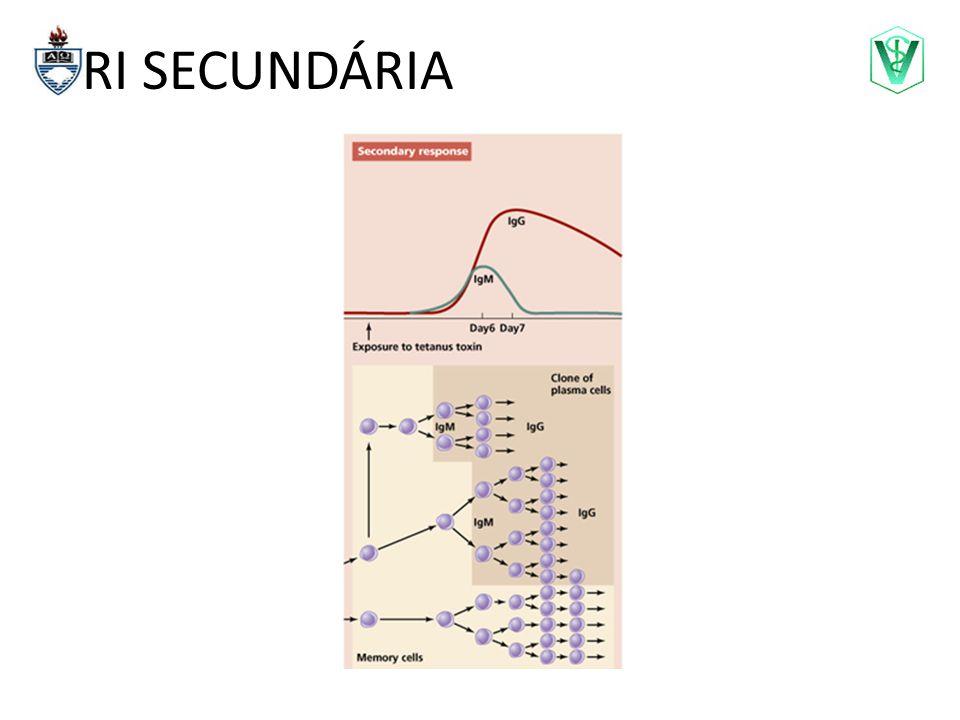 Reatividade Cruzada Reação Cruzada: quando um mesmo epitopo (ou mais de um) está(ão) presente(s) em diferentes Ag.