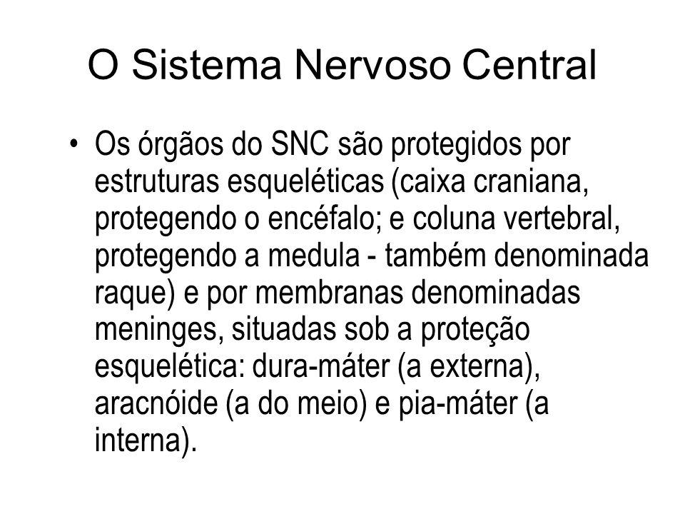 Fisiologia 2 Córtex cerebral Homúnculos