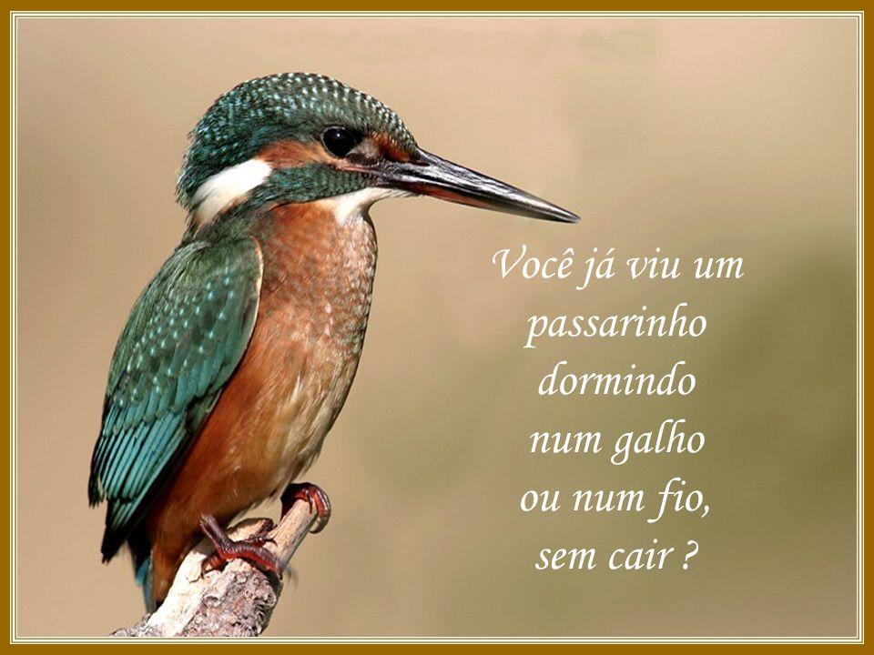 O PÁSSARO E A ORAÇÃO Ligue seu som Por: Wesley Simões Clique