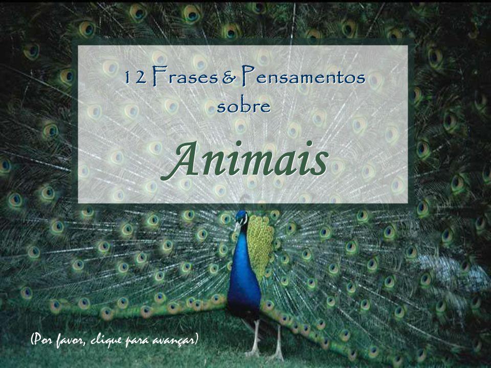 12 Frases & Pensamentos sobre Animais (Por favor, clique para avançar)