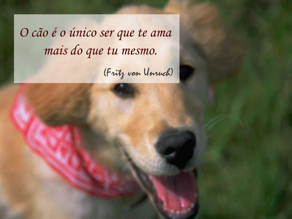 O cão é o único ser que te ama mais do que tu mesmo. (Fritz von Unruch)