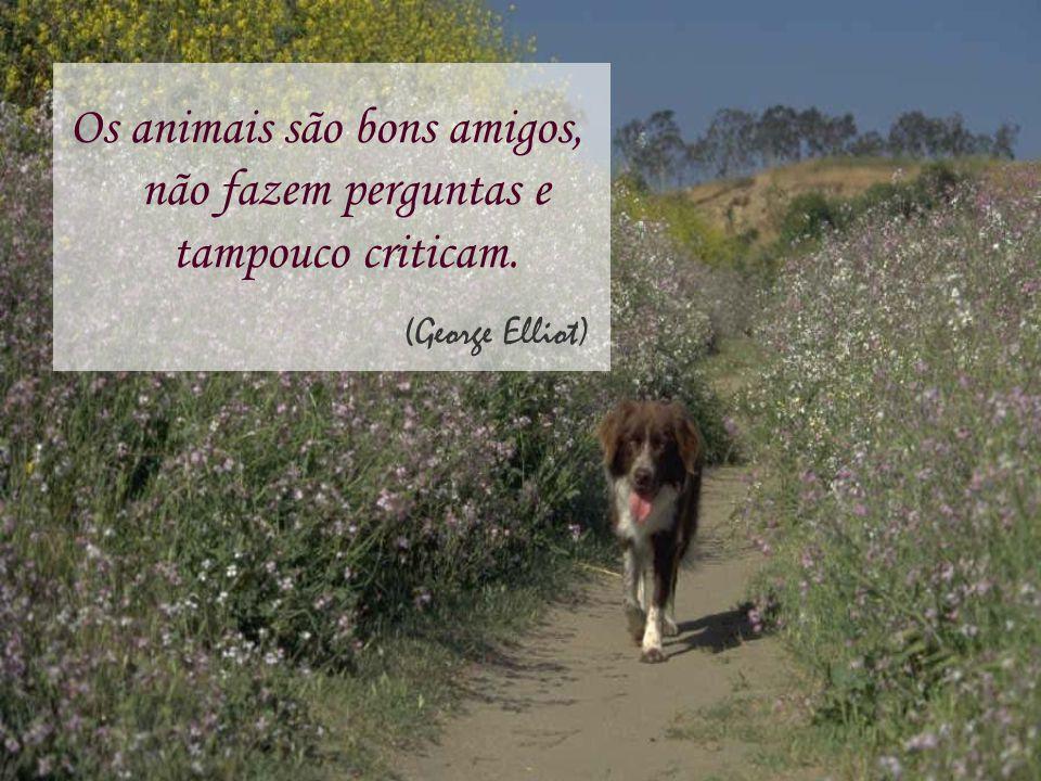 Os animais são bons amigos, não fazem perguntas e tampouco criticam. (George Elliot)