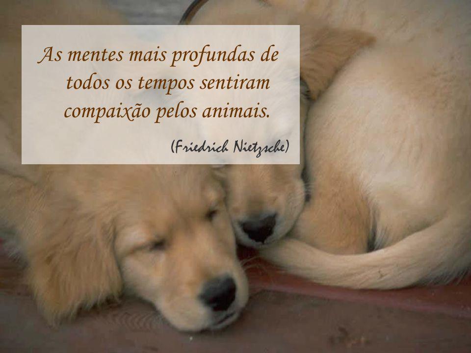 As mentes mais profundas de todos os tempos sentiram compaixão pelos animais. (Friedrich Nietzsche)