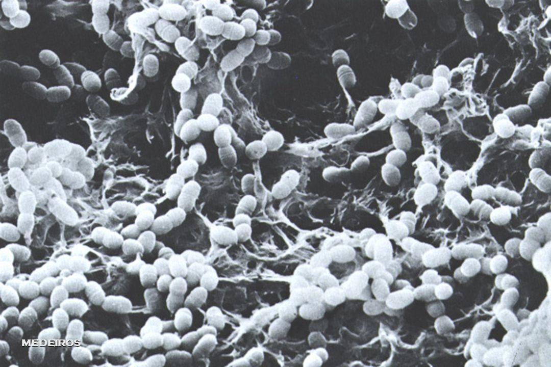 EGM  Capacidade de colonizar biofilme  Aumento do número de mutans no biofilme  Aumento do número de mutans em indivíduos com alta prevalência;  C