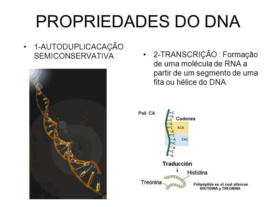 PROPRIEDADES DO DNA 1-AUTODUPLICACAÇÃO SEMICONSERVATIVA 2-TRANSCRIÇÃO : Formação de uma molécula de RNA a partir de um segmento de uma fita ou hélice