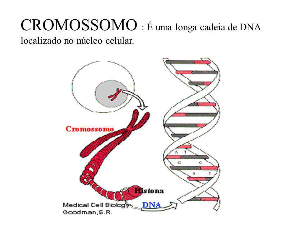 Cromonema = Cromossomo http://www.universitario.com.br/celo/aulas/DNA.exe