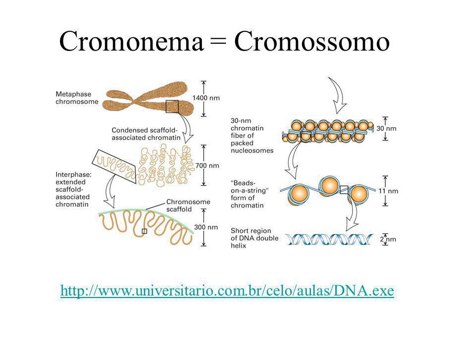 O Cromossomo é formado por cromátides ligadas pelo centrômero.