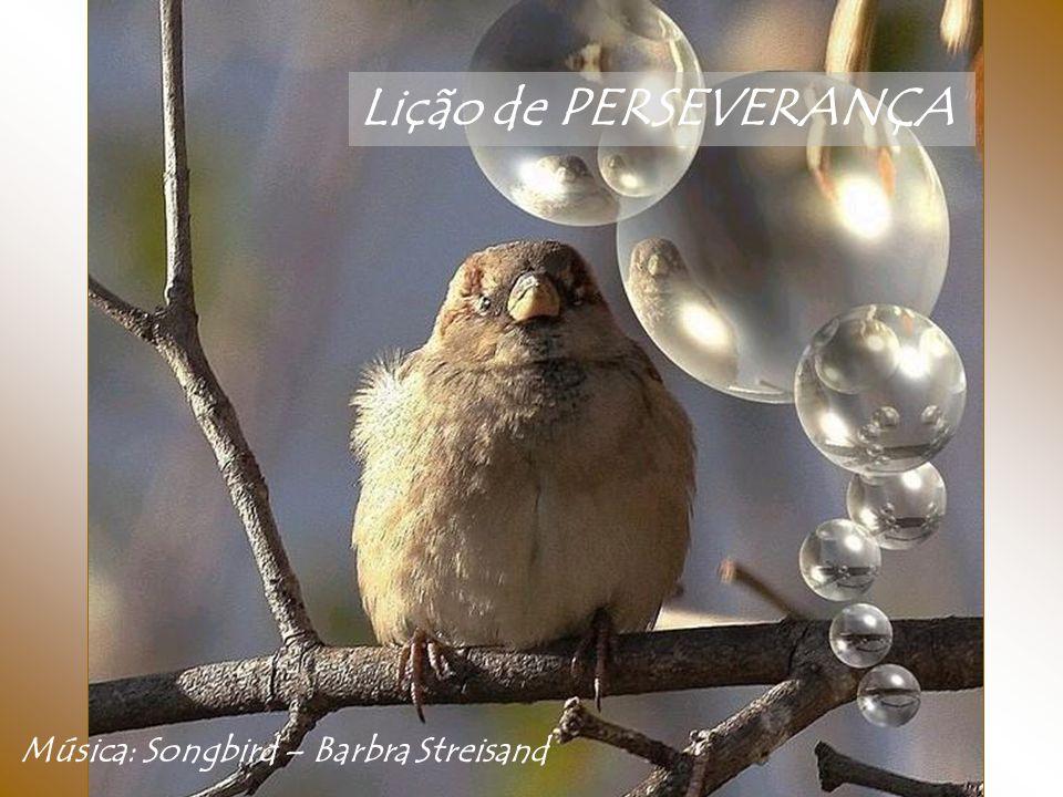 Lição de PERSEVERANÇA Música: Songbird – Barbra Streisand