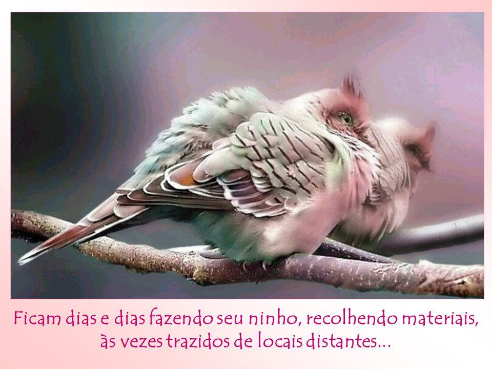 Já observou a atitude dos pássaros ante às adversidades?