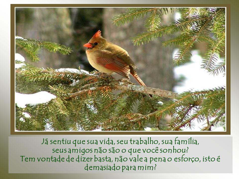 Dói recomeçar do zero... Mas ainda assim o pássaro jamais emudece, nem retrocede, segue cantando e construindo, construindo e cantando...