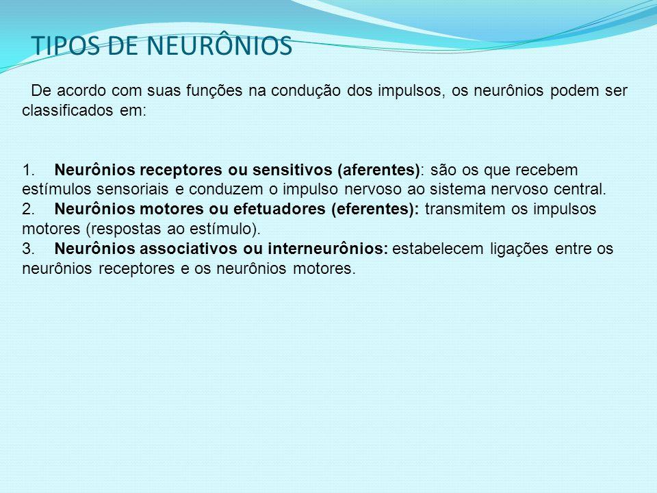 TIPOS DE NEURÔNIOS De acordo com suas funções na condução dos impulsos, os neurônios podem ser classificados em: 1.