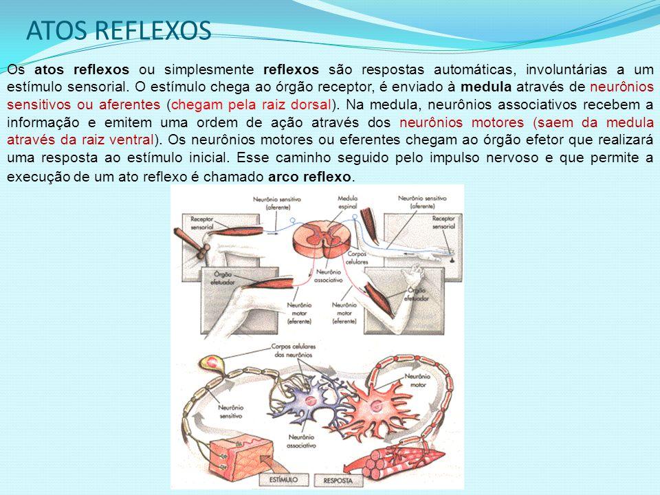 ATOS REFLEXOS Os atos reflexos ou simplesmente reflexos são respostas automáticas, involuntárias a um estímulo sensorial.
